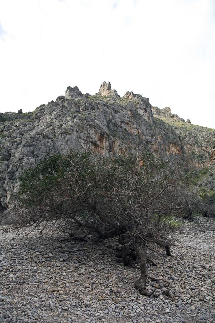 Mallorca tur